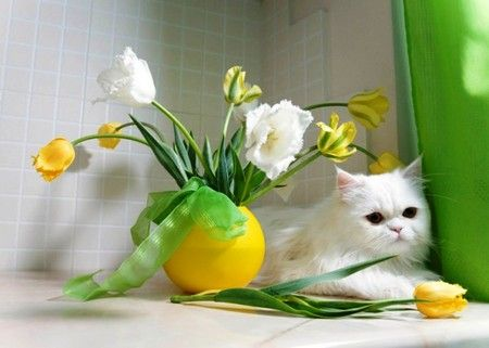 Big Cats And Flowers Tulips And White Cat Yellow Harmony Color White Tulips Flowers Yellow Cat Cats Crazy Cats
