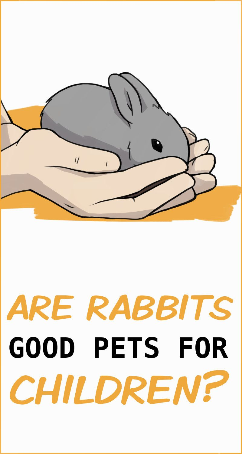 Are Rabbits Good Pets For Children In 2020 Rabbit Facts Children