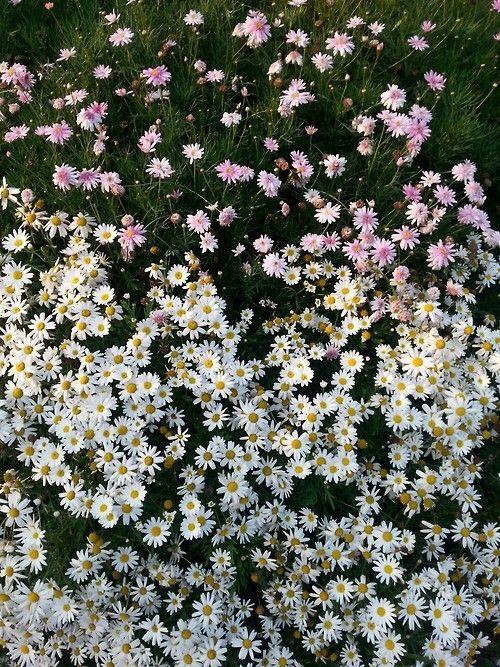 Beautiful flowers tumblr pretty flowers pinterest beautiful beautiful flowers tumblr mightylinksfo