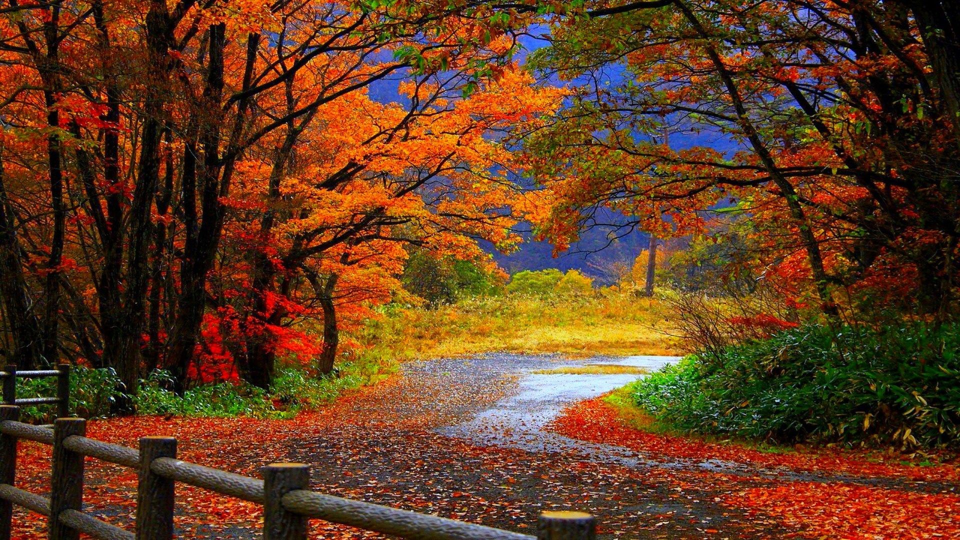 Download Fall Computer High Resolution Images Osennij Pejzazh Osennie Vidy Zhivopisnye Pejzazhi