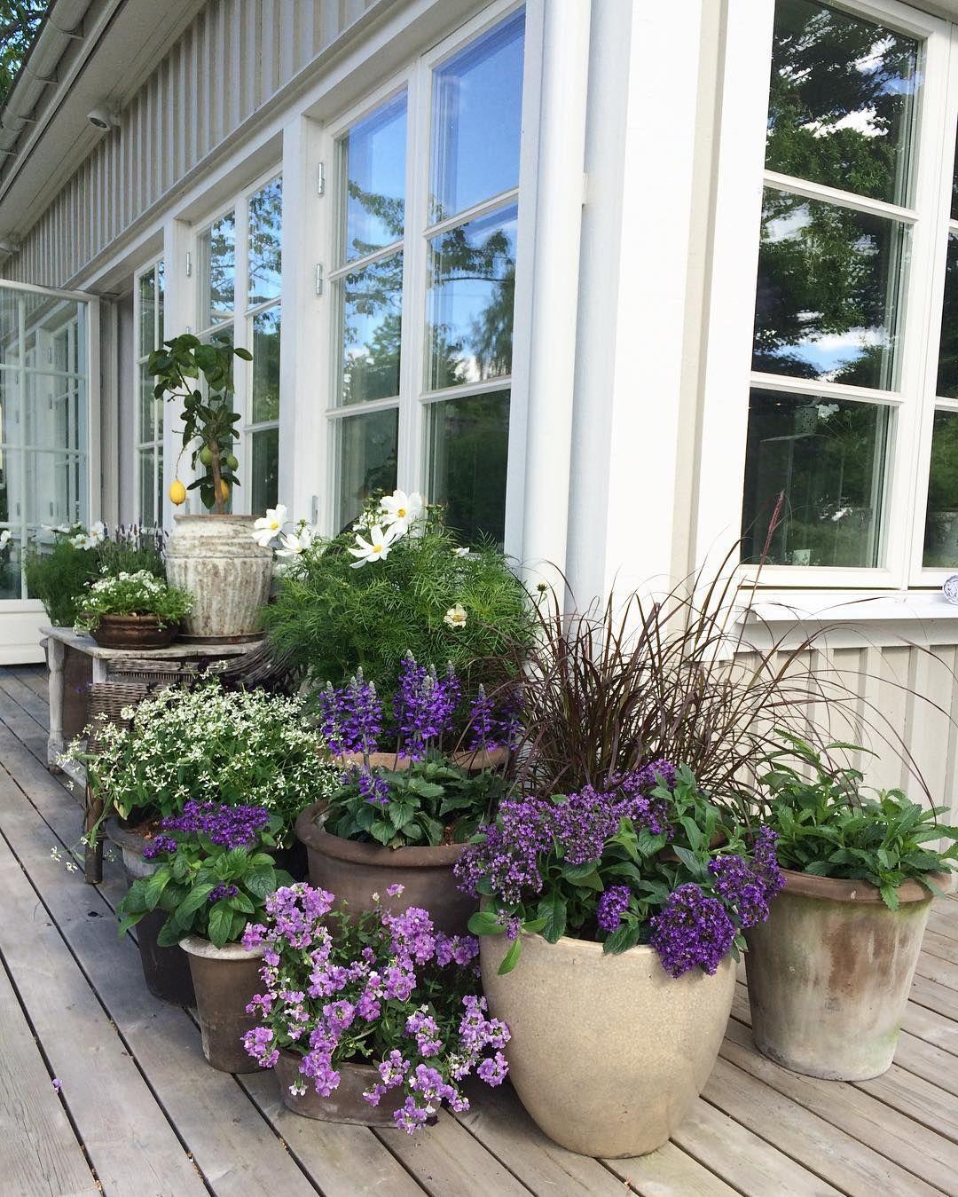 8 Stunning Container Gardening Ideas: Beautiful Monochromatic Container Garden