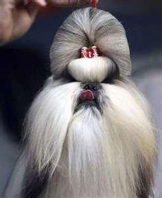 Topknot Hundehaarschnitte Pflege Hunde Tierpfleger