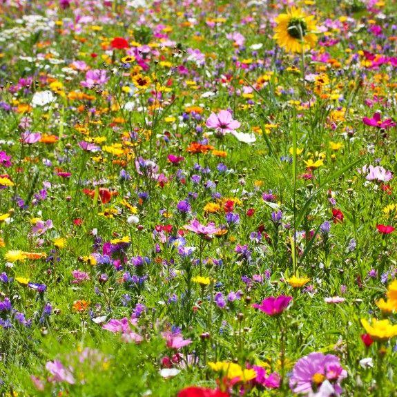 Eine Natürliche Wiese Im Garten Ist Nicht Nur Schön Anzusehen ... Blumenwiese Anlegen Garten
