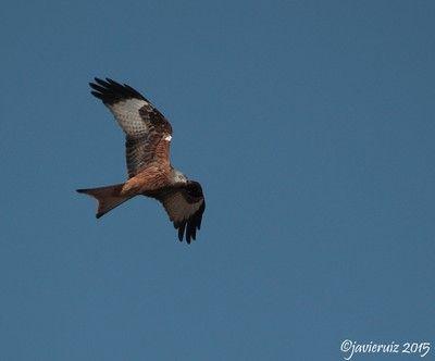 El Grupo Local SEO Barcelona acudió a una jornada de voluntariado con SEO/Birdlife en la Finca San Miguel de Belver de Cinca con los colegas de la Delegación de SEO/BirdLife en Aragón y de los Grupos Locales de Huesca y Zaragoza
