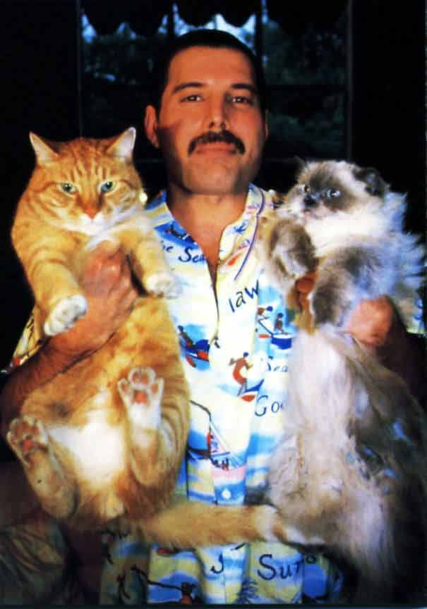 Freddie Mercury and His Love for the Cats He Treated Like Children #freddiemercury