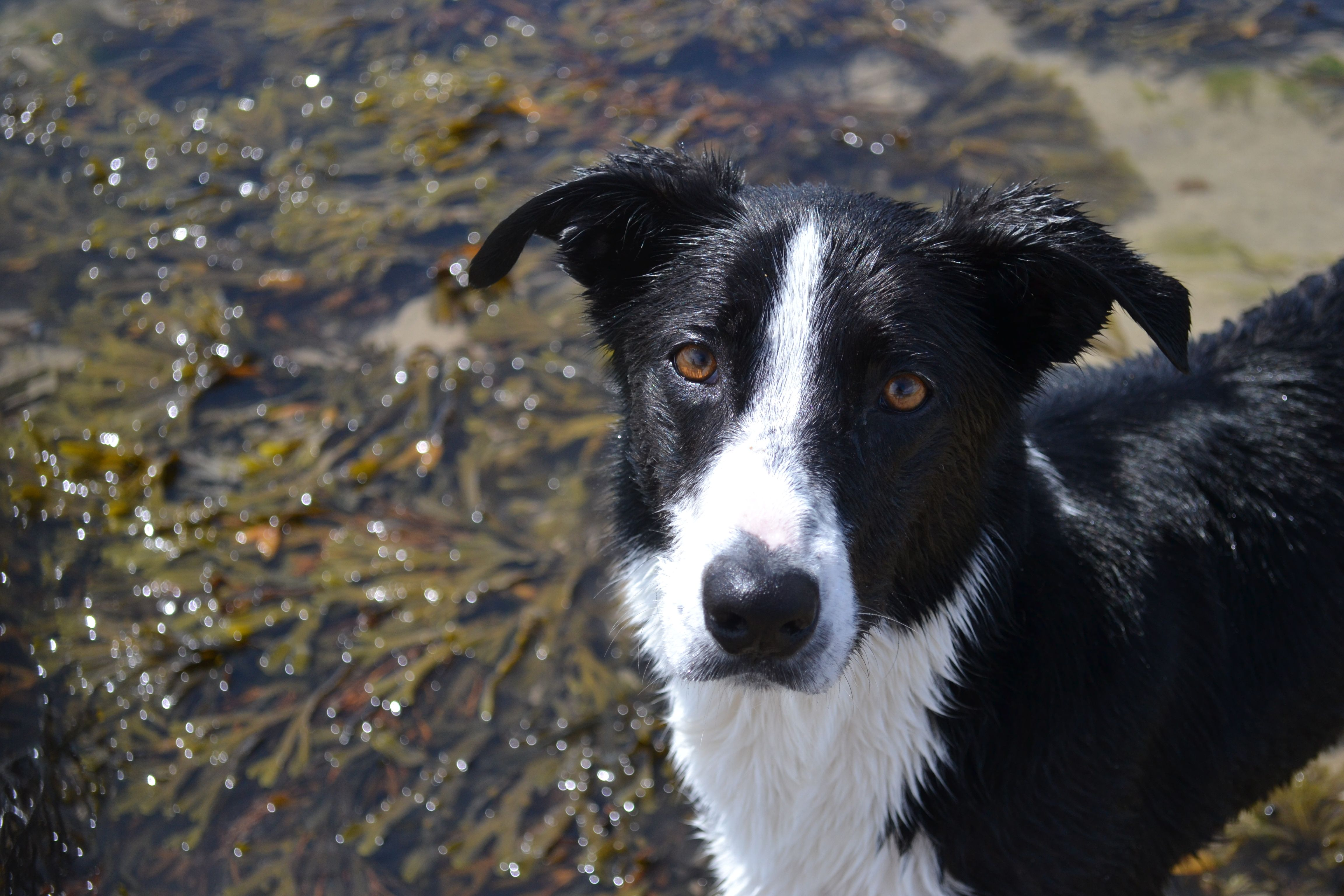 Cornwall Holiday Mixed Breed Dogs Border Collie Holidays In