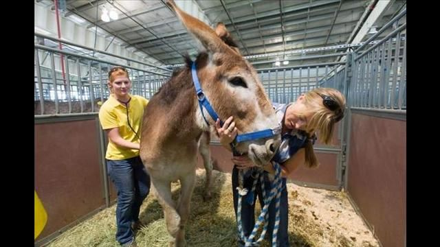 Donkey saves four other animals from High Park Fire
