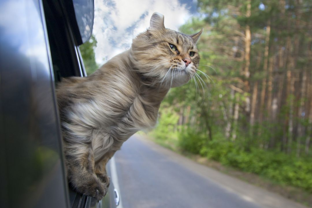10 cats that act like dogs (but still have kitty traits