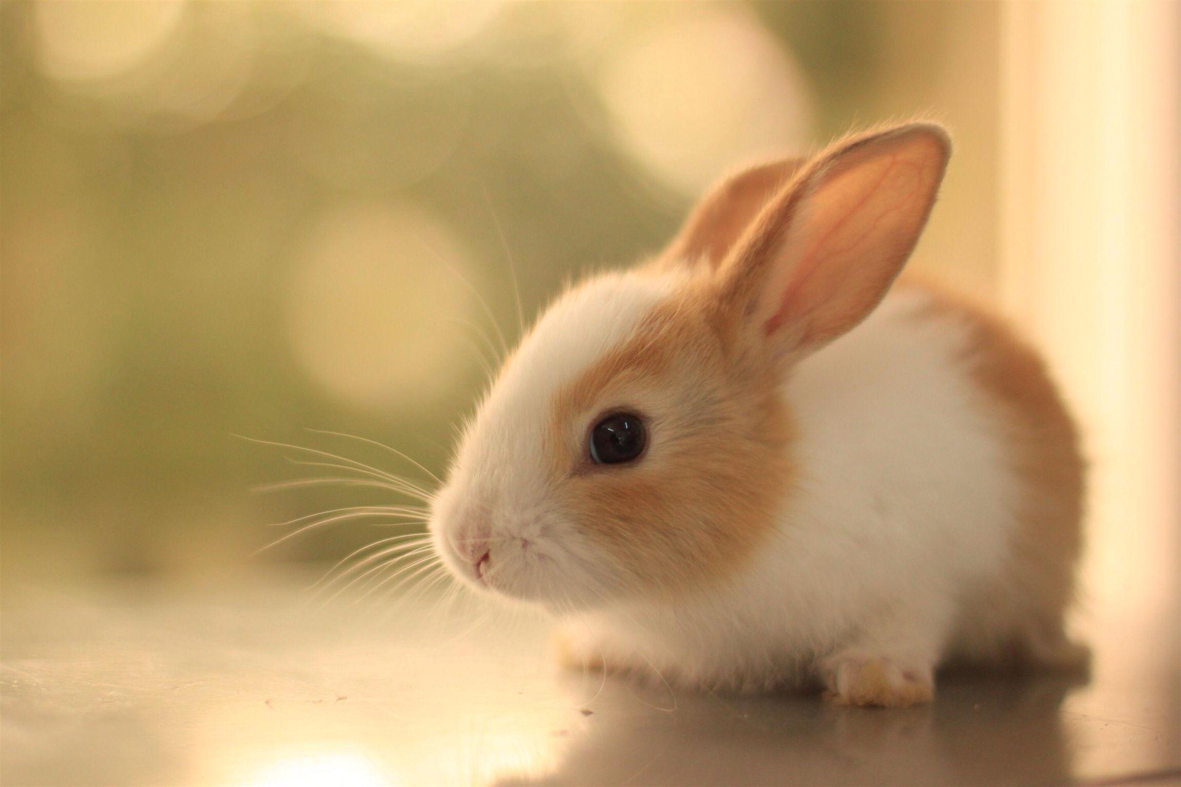 Rabitt Cute Baby Bunnies Cute Animals Cute Baby Animals