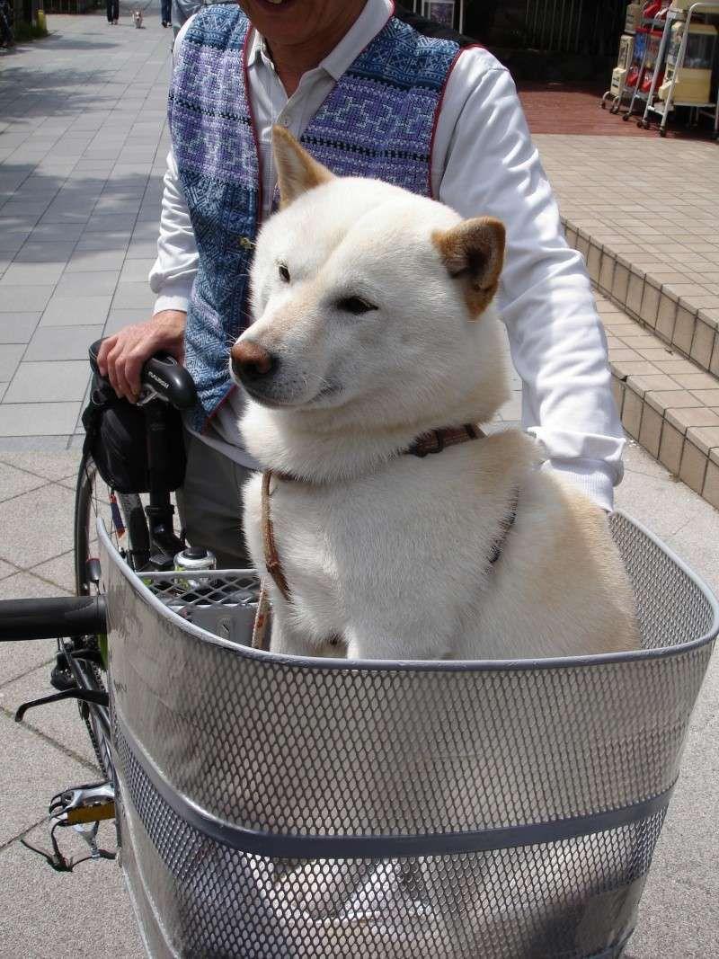 Faire du vélo avec son chien | Animalerie | Pinterest