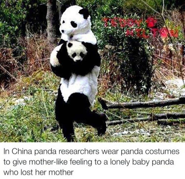 Aww that's so sweet. Pandas