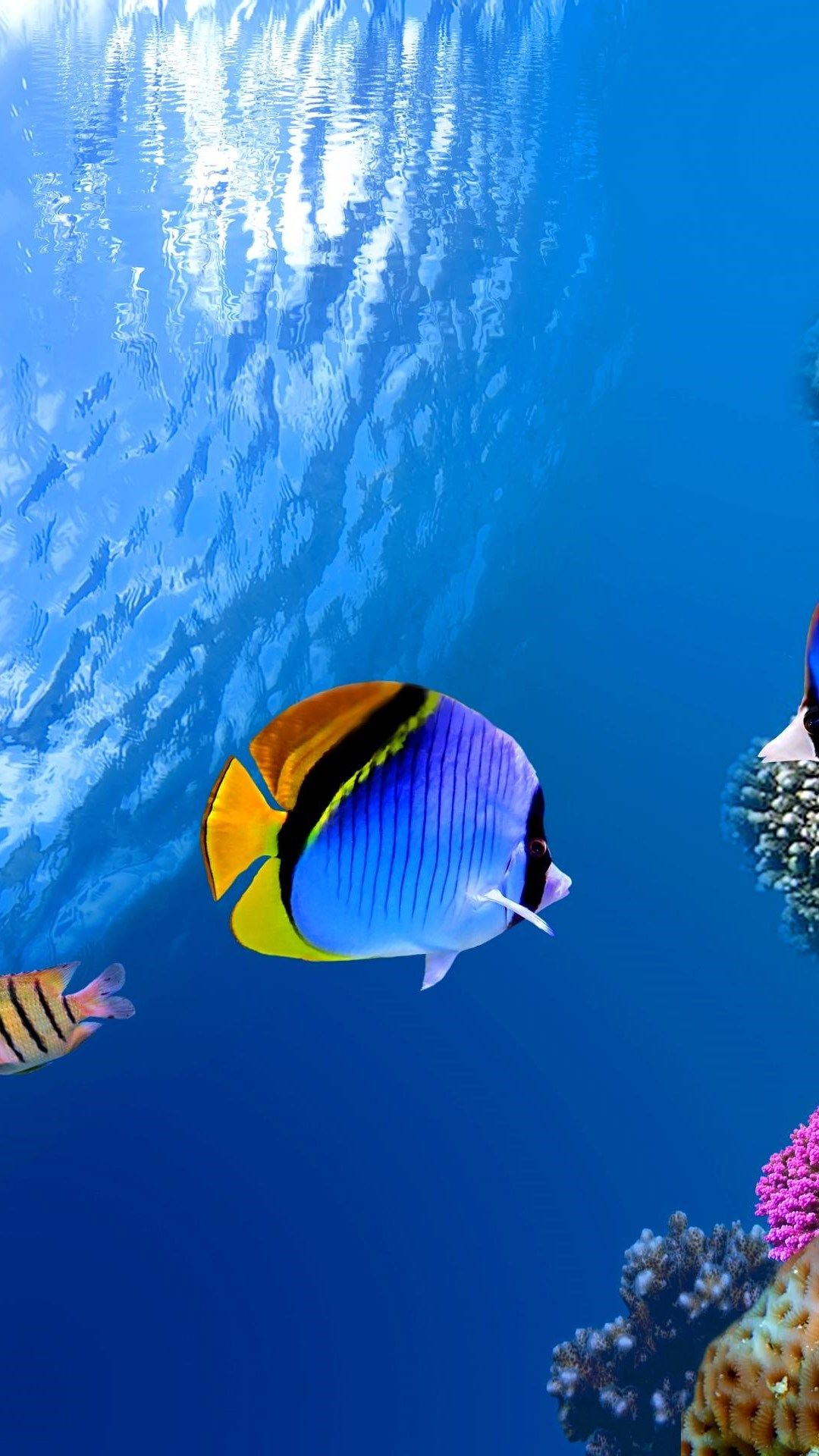 Underwater. Paradise iPhone Wallpapers - mobile9 #underwater #fish #sea | iPhone 8 & iPhone X ...