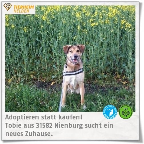 Tobie sucht im Tierheim Schessinghausen einen Freund fürs