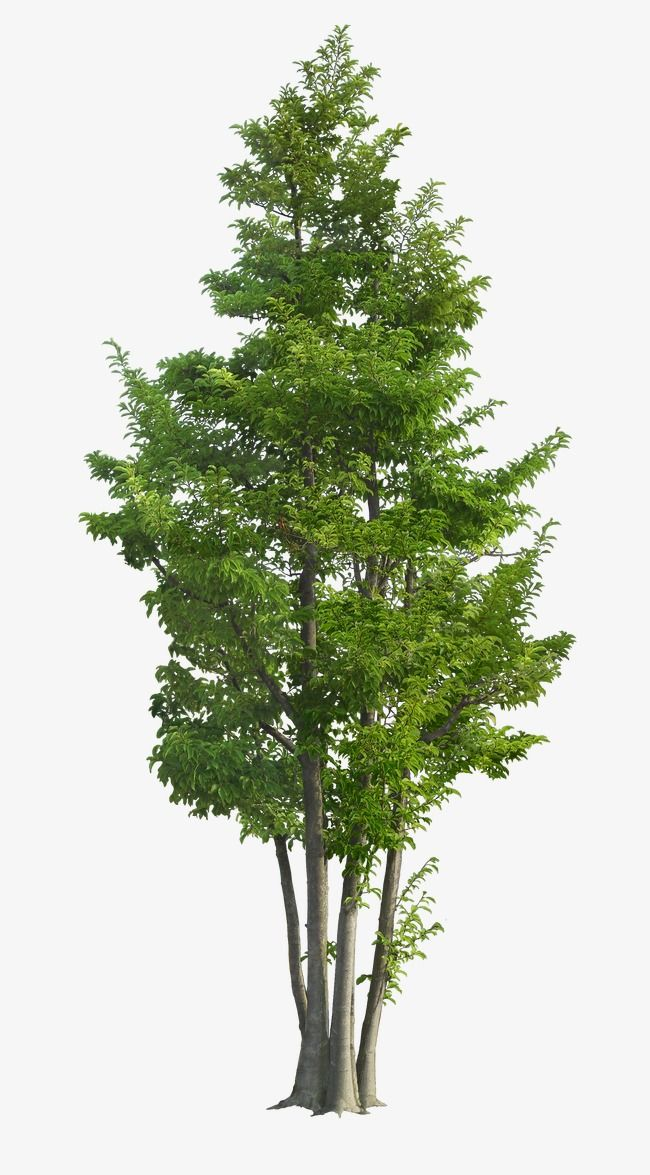 Luxuriant Trees Tree Layer Plants Png Transparent Clipart Image