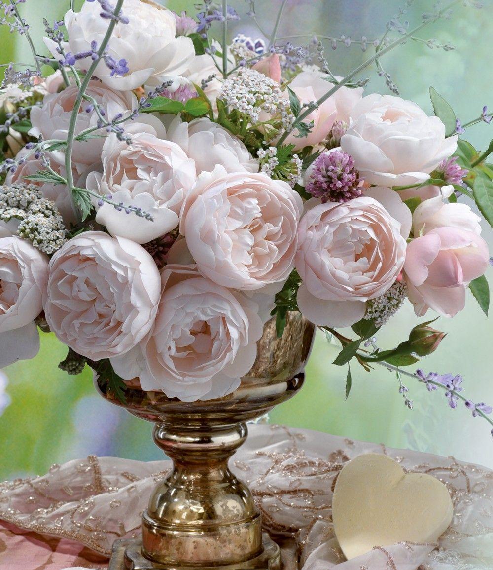 Parfum Rose Vichy 1a Qualitat Online Kaufen Schone Rose Pflanzen Rosen Pflanzen