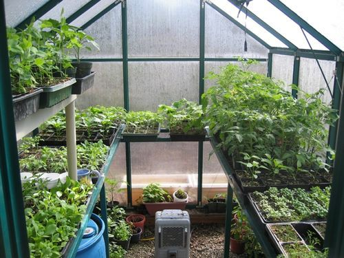 Gardening Advice Should I Plant Seeds Or Starts In The Garden Vegetables