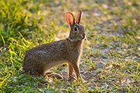 A Friendly Bunny Is Seen Hanging Out At Desoto National Wildlife