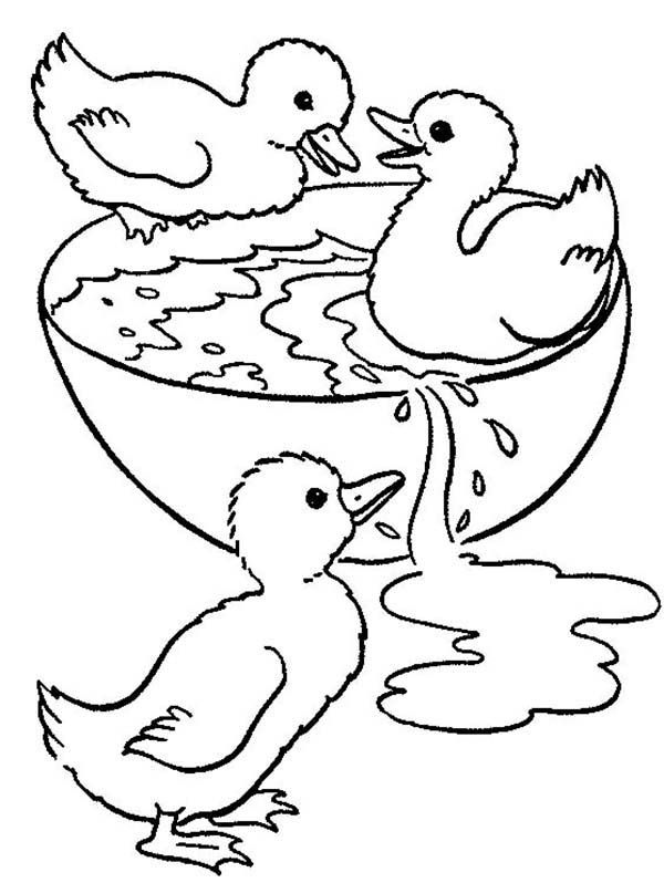 Three Ducklings Swimming In A Bowl Coloring Page Duckling