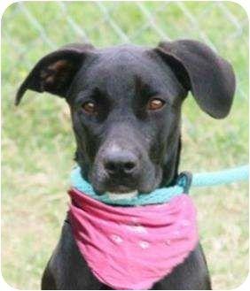 Adoptable Dog Toni Labrador Retriever Mix Liverpool Tx Dog Adoption Rescue Pets Animals Pets Kitten Adoption Adoption