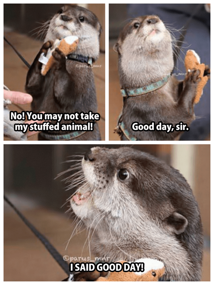 Funny Animal Pictures Of The Day - 26 Pics #funnyanimalpics