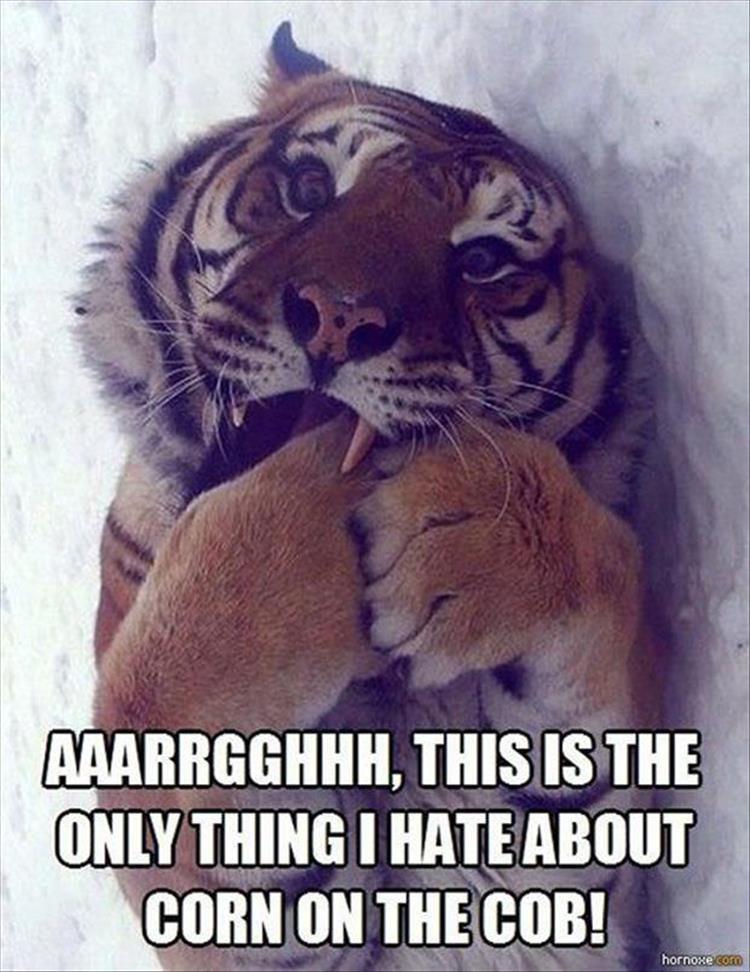 Funny Animal Meme Dump 24 Pics Funny Animal Memes Funny Animals Animals
