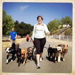 Oliver S Travels Dog Training Bay Area Virginia Bay Ca South Bay