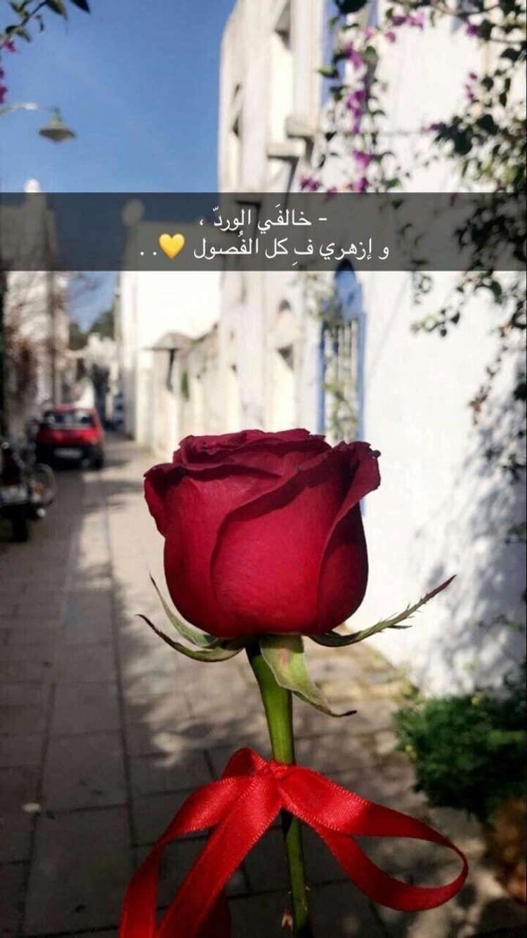 Pin By On عبارات جميلة Arabic Quotes Rose Quotes Photo Quotes