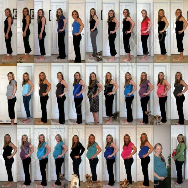 pregnancy tracker day by day