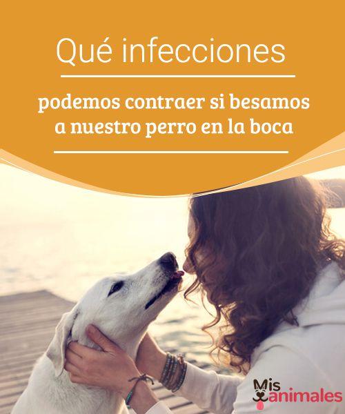 perro a infecciones humanas
