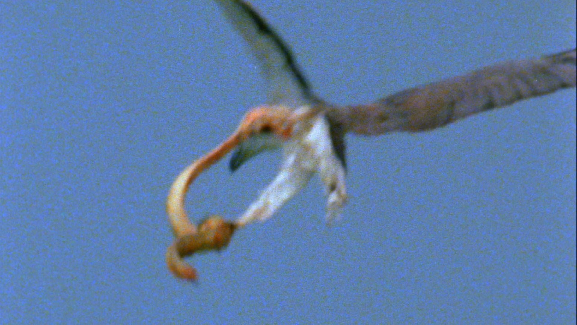 Deadliest Fight Between Eagle And Snake In The Air Filmed