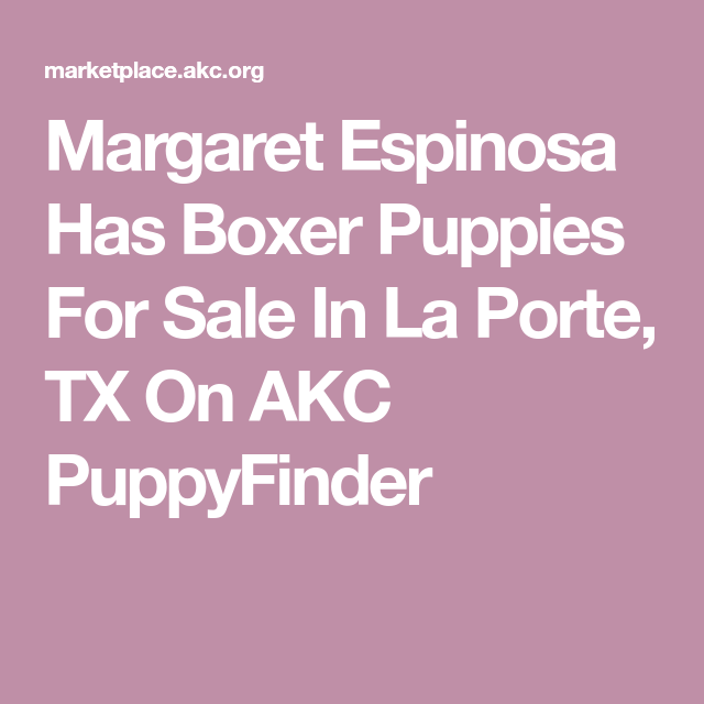 Margaret Espinosa Has Boxer Puppies For Sale In La Porte Tx On Akc Puppyfinder In 2020 Boxer Puppies For Sale Puppies For Sale Boxer Puppies