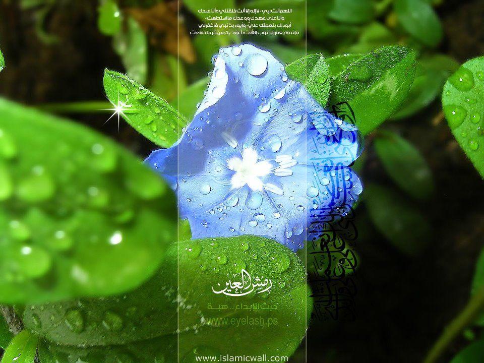 Islamic Wallpaper Flower iphone wallpaper, Blue flower