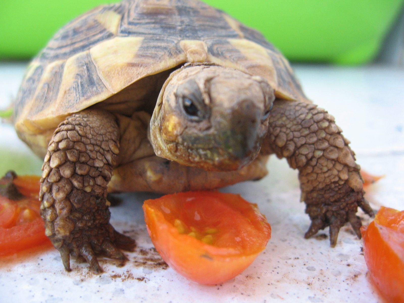 My turtle Rughina
