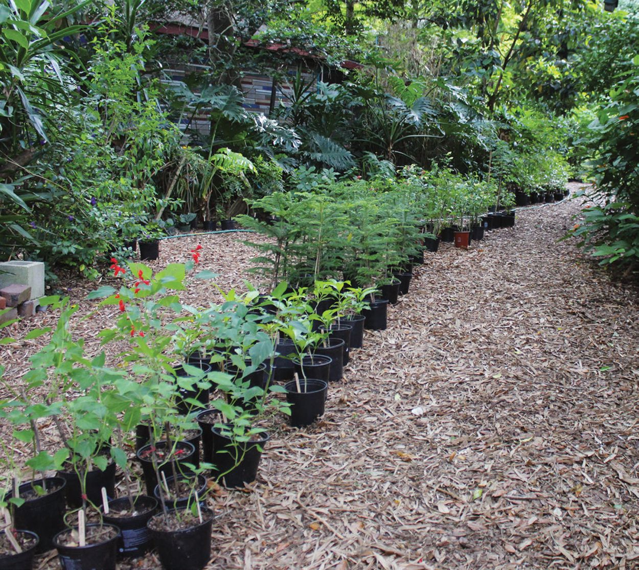 Starting A Nursery Business From Home Whether Small Or Large Means Knowing The Best Ways To Propagate And Plants