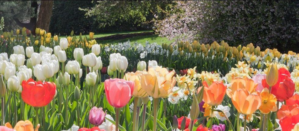 Longwood Gardens Mother's Day Brunch