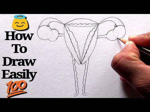 How to Draw Female Reproductive System step by step for ...