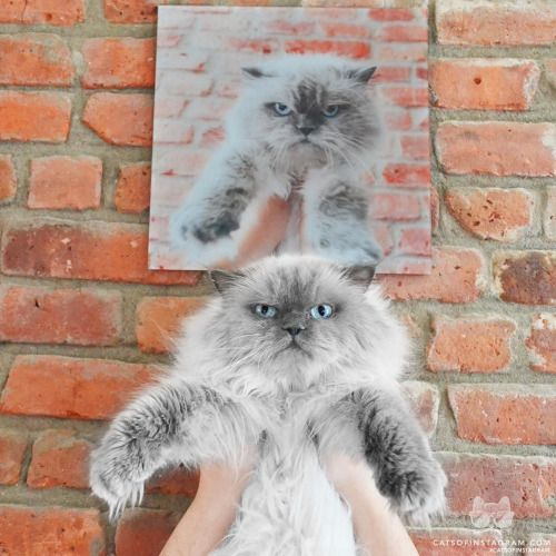 From @rukasthecat: All too familiar all too dreadful. Put me down. #twitterweek #catsofinstagram  #TwitterWeek: Follow us on Twitter for a chance to be featured this week! [source: http://ift.tt/1PERxwW ]