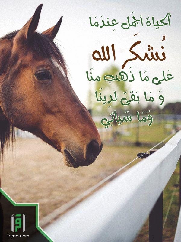 الحياة أجمل عندما نشكر الله على ما ذهب منا وما بقي لدينا وما سيأتي دعاء اسلاميات اقرأ للناس كافة بطاقات اسلامية Animals Photo Sayings