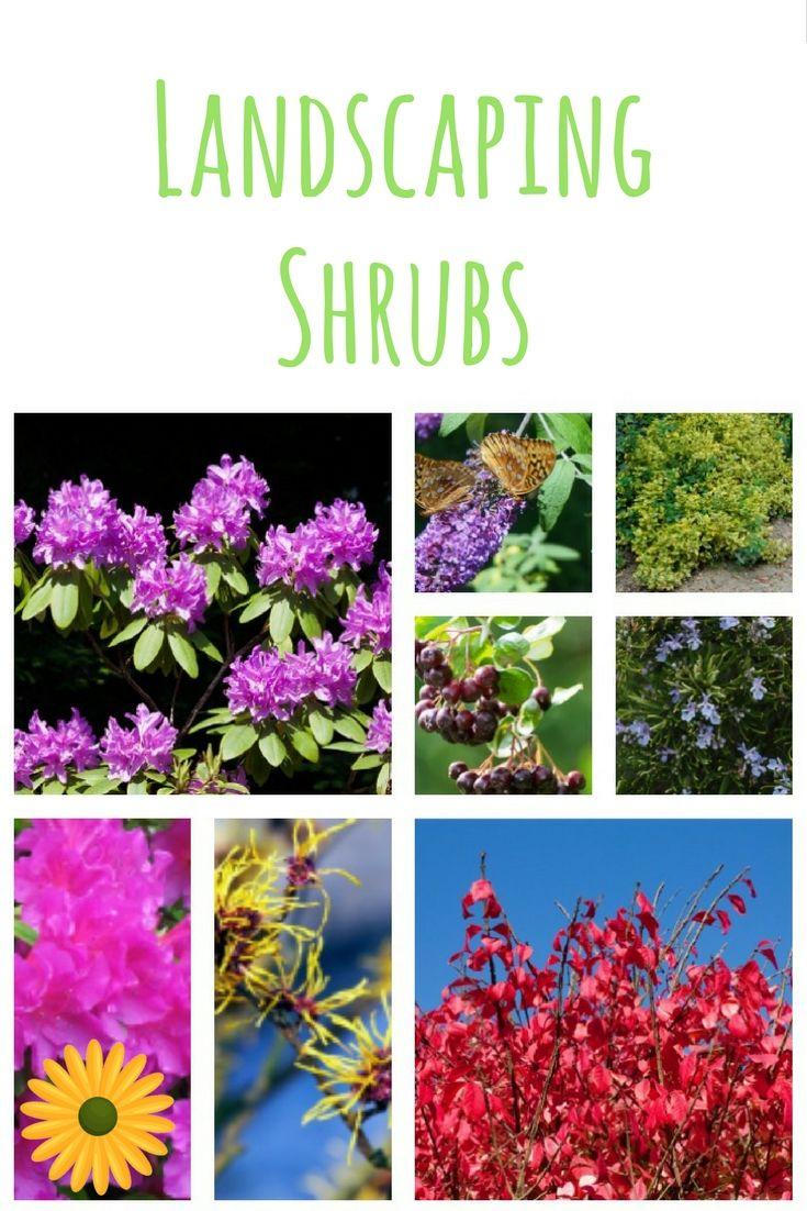 landscape shrub ideas for your home landscaping shrubs shrub
