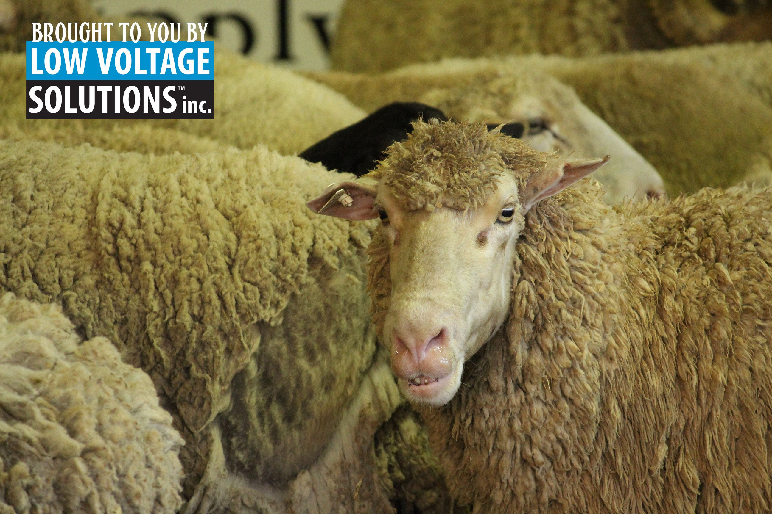 Don't hate me cuz I'm fabulous. Bring your best to the #ntfair! Sign up your livestock today.