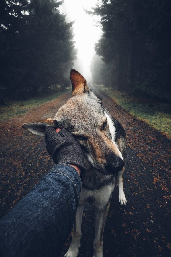 Man's adorable photo series shows him petting his dog around Czech Republic