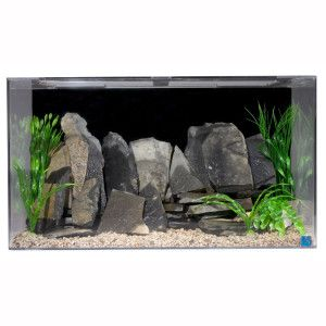 Null Acrylic aquarium, Cool fish tanks, Saltwater