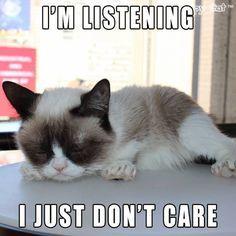 #GrumpyCat #meme Grumpy Cat stuff, gifts and meme on www.pinterest.com/erikakaisersot