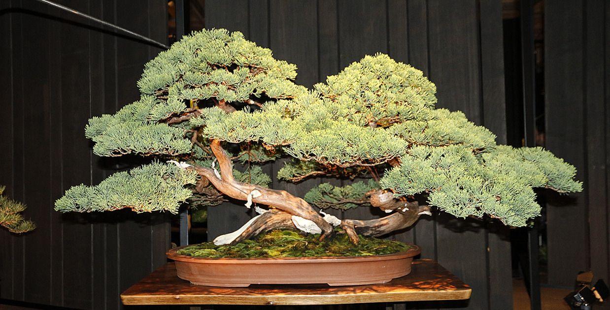Pin By Mark Toler On Bonsai Trees Bonsai Bonsai Garden Bonsai Tree