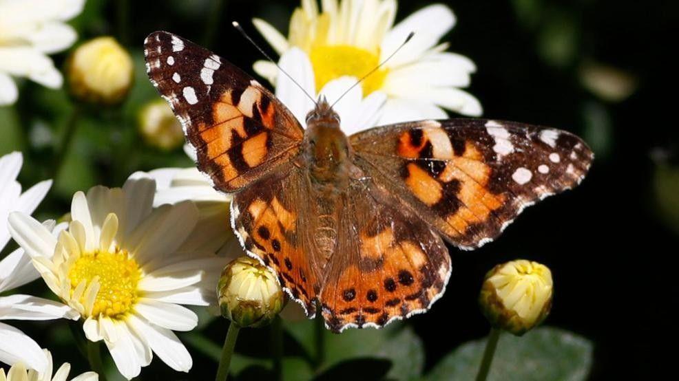 Butterflies make colorful display -- on Denver weather radar! | KOMO