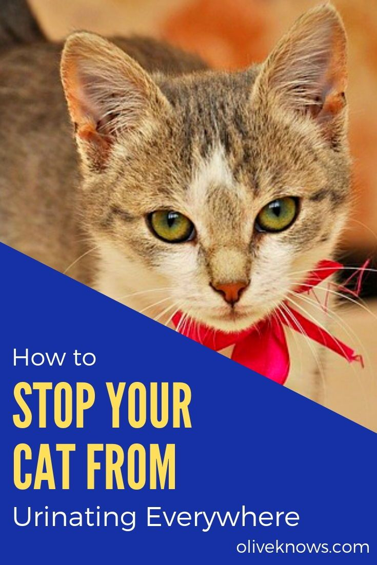 How to Stop Your Cat from Urinating Everywhere