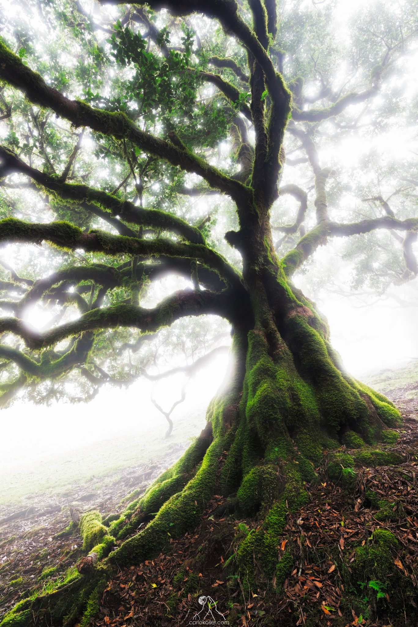 The Laurel Forests of Madeira in the Atlantic are a truly magic place. A few…