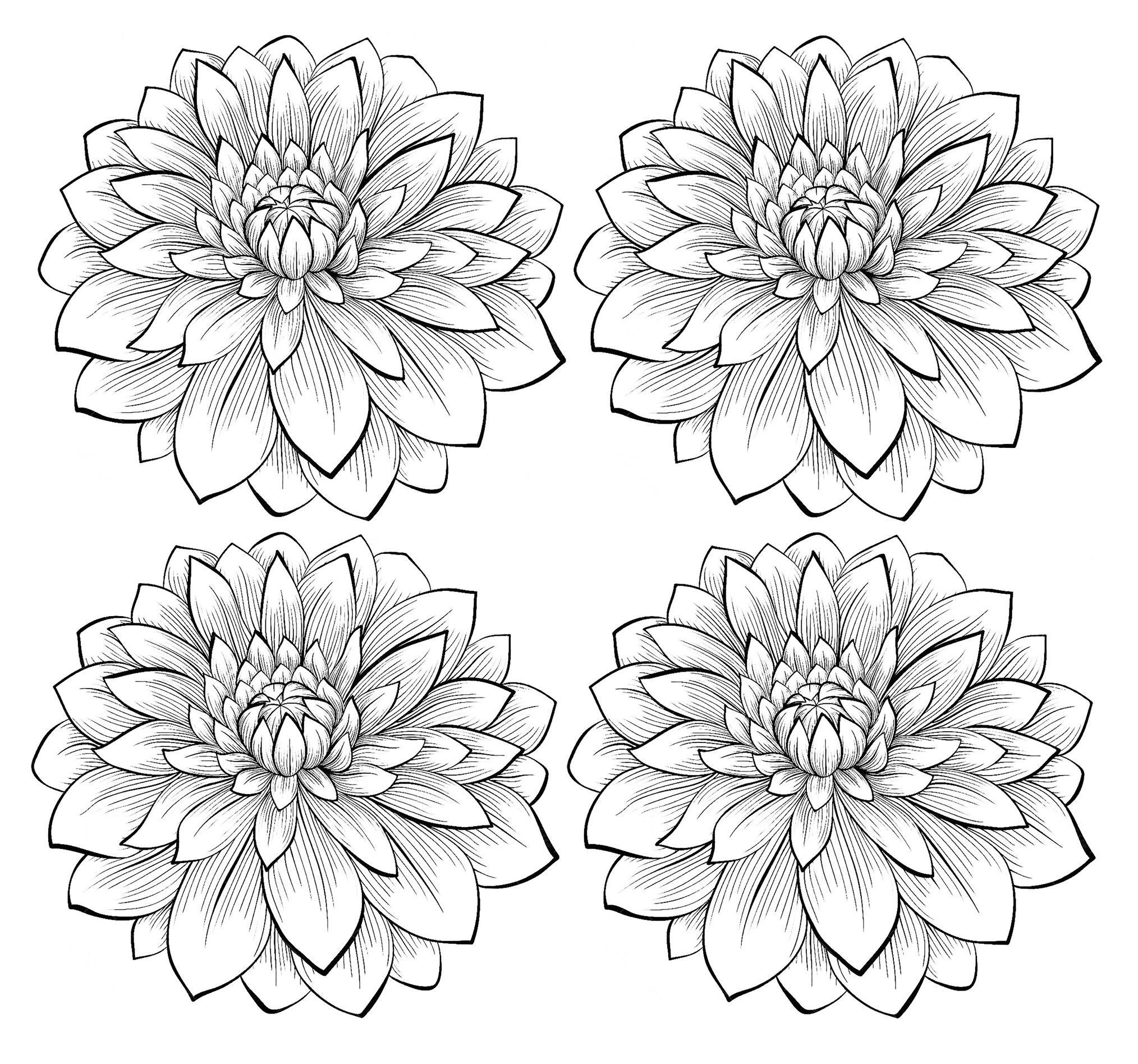 Four Dahlia Flowers
