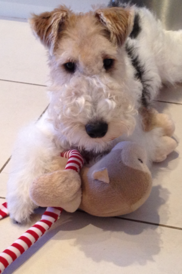 Let\'s find out if this toy\'s got any stuffing, shall we?   Wire ...