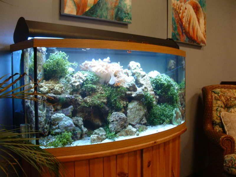 Aquarium Furniture Stands Aquarium Furniture Design Aquarium Furniture Uk Aquarium Furniture India Aquarium F Aquarium Decor Diy Aquarium Fish Tank Decorations